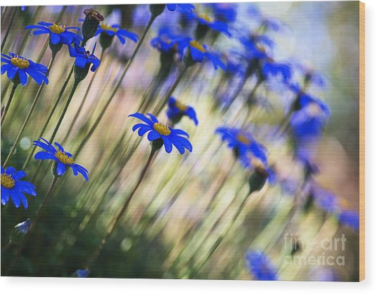Beautiful Dancing Blue Flowers Romance Wood Print