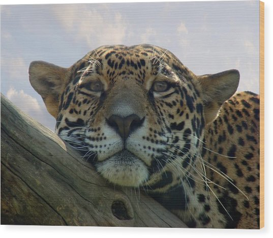 Beautiful Jaguar Wood Print