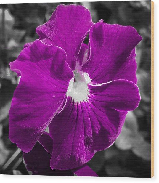 Beautiful Purple Wood Print