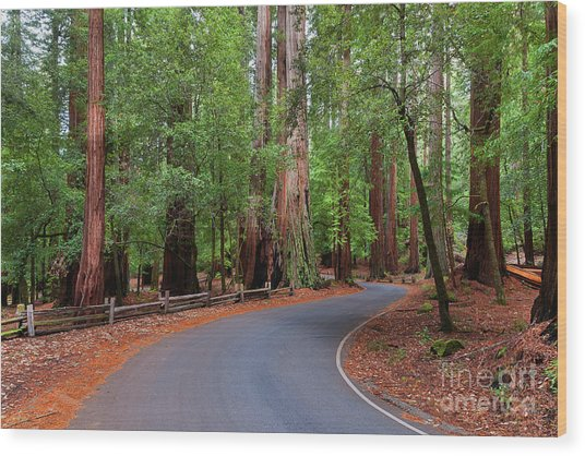 Beautiful Redwood Grove Wood Print
