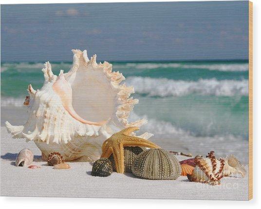 Beautiful Sea Shell On Sand Wood Print