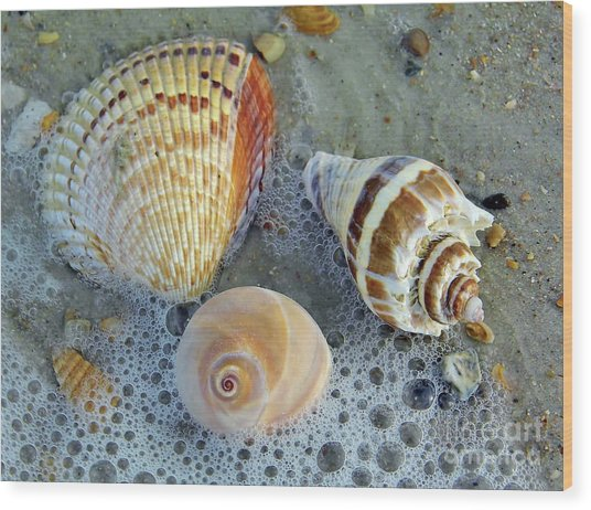 Beautiful Shells In The Surf Wood Print