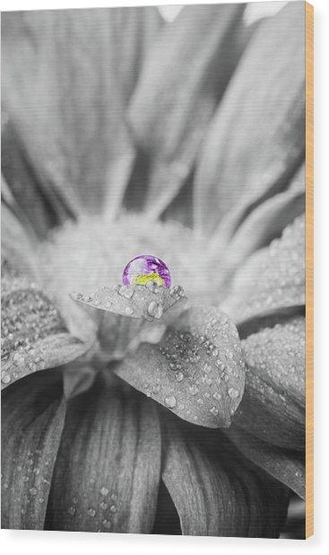Beautiful Splash Of Purple On A Daisy In The Garden Wood Print