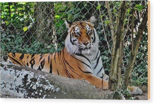 Beautiful Tiger Wood Print