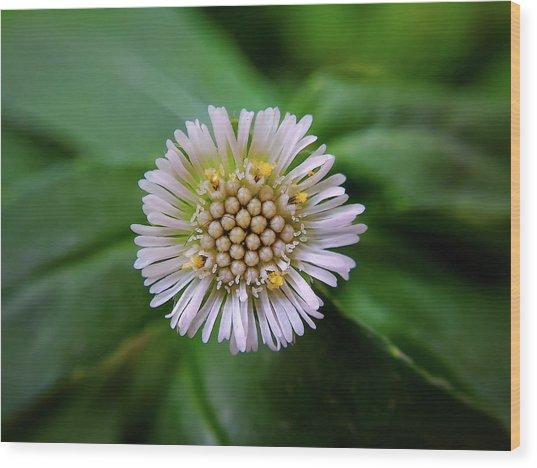 Beautiful White Flower Wood Print by Argie Dante