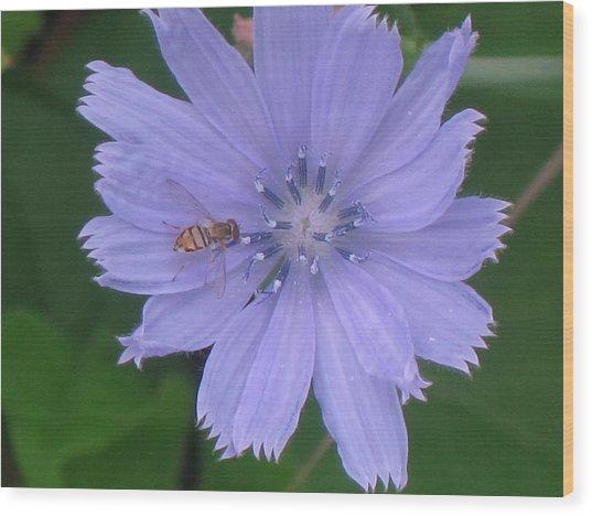 Beauty And The Bee Wood Print by Marjorie Tietjen