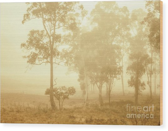 Beauty In A Forest Fog Wood Print