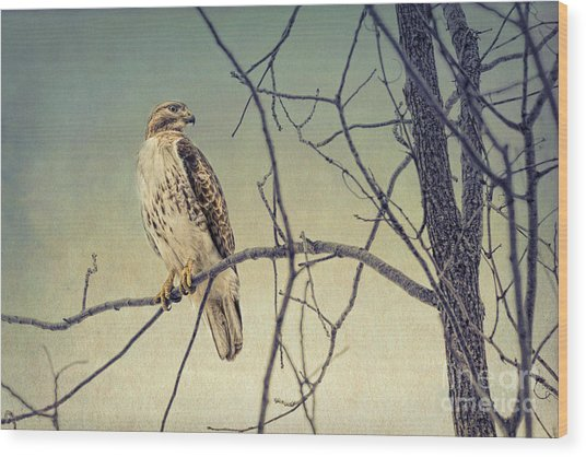 Red-tailed Hawk On Watch Wood Print