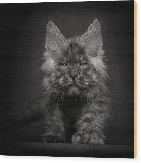 Wood Print featuring the photograph Beauty Or Beast by Robert Sijka