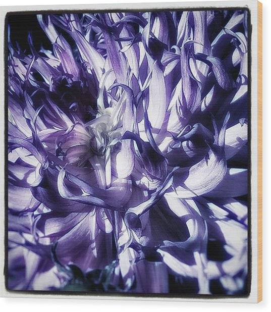 Wood Print featuring the photograph Beauty Out Of Chaos. No Wonder Dahlias by Mr Photojimsf