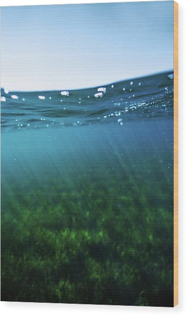 Beauty Under The Water Wood Print