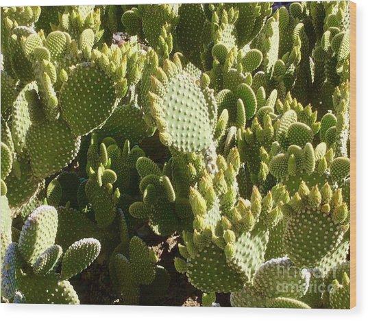Beaver Tail Cactus, Cave Creek, Arizona Wood Print
