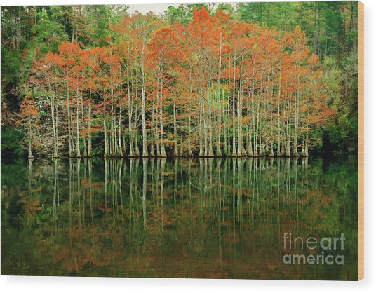 Beaver's Bend Cypress All In A Row Wood Print
