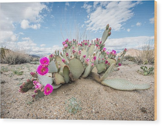 Beavertail Cactus Wood Print