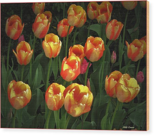 Bed Of Tulips Wood Print