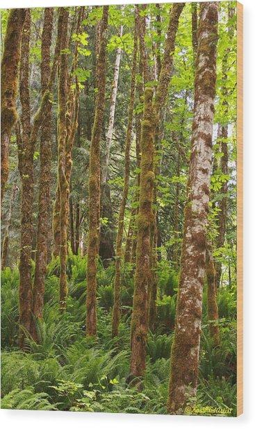 Bedal Wood Print
