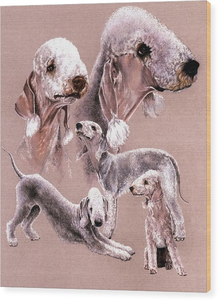 Bedlington Terrier Wood Print