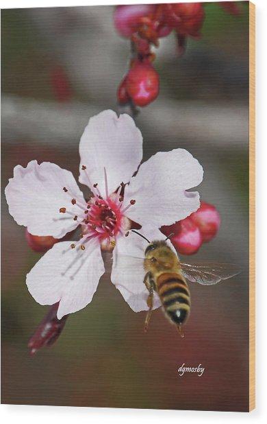 Bee And Blossom 9592 Wood Print by David Mosby