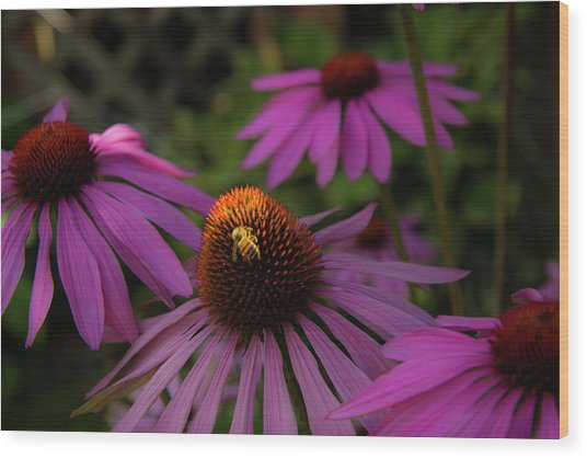 Bee And Coneflower Wood Print