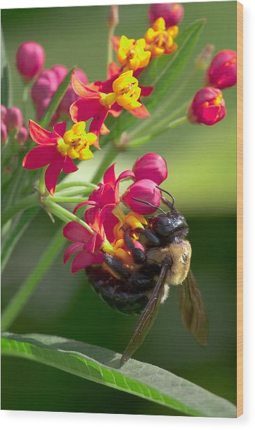 Bee And Flowers Wood Print by E Mac MacKay