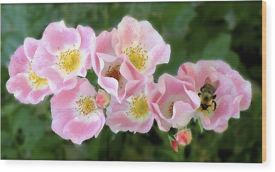 Bee And Roses Wood Print
