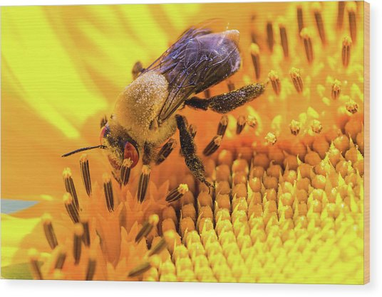 Bee And Sunflower Wood Print
