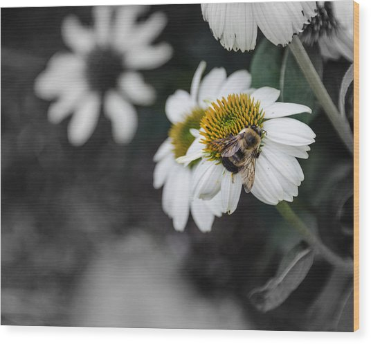Bee Daisied Wood Print