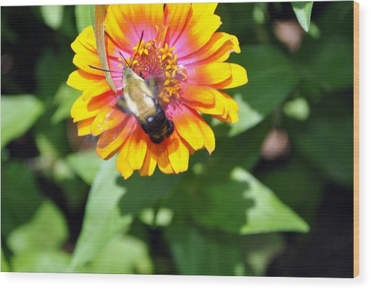 Bee Easy Wood Print by Dion Baker
