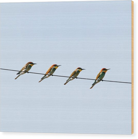 Bee Eaters On A Witre  Wood Print