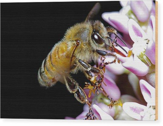 Bee Feeding Wood Print