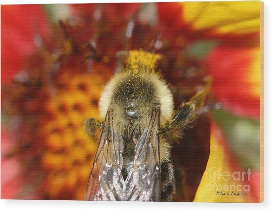 Bee Five - Wood Print by Silvana Siudut