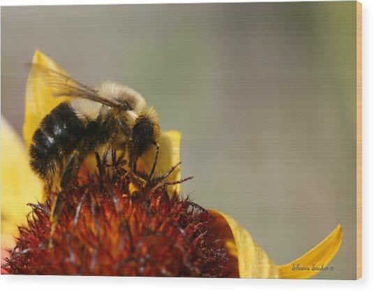 Bee Four Wood Print by Silvana Siudut