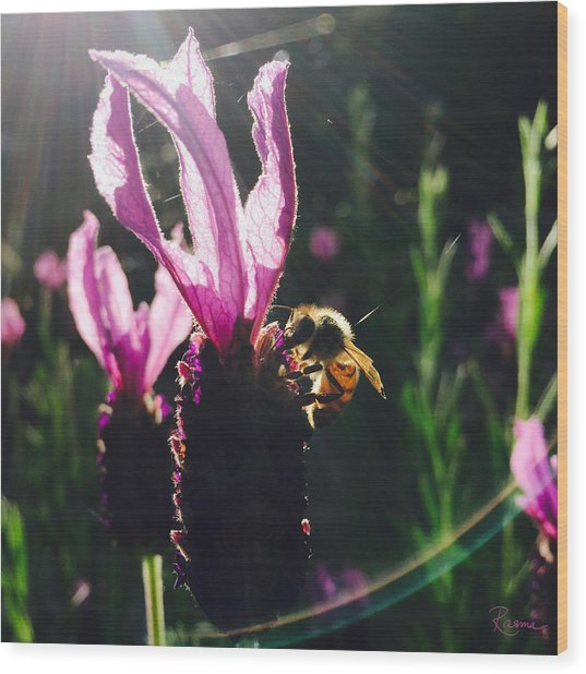Bee Illuminated Wood Print