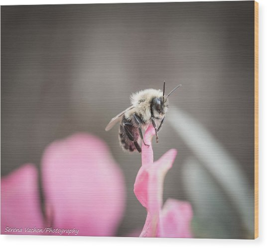 Bee On A Flower Wood Print