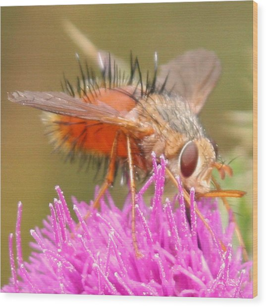 Bee On A Thistle Wood Print by Doug Johnson