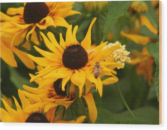 Bee On Daisy Wood Print by Eric Irion