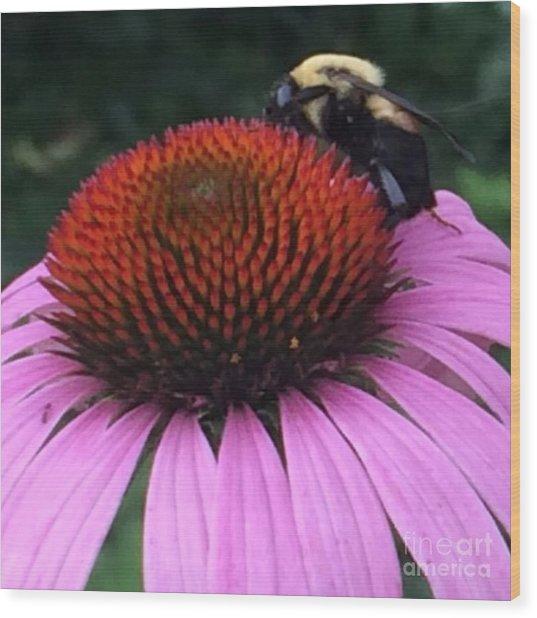 Bee On Flower By Saribelle Rodriguez Wood Print