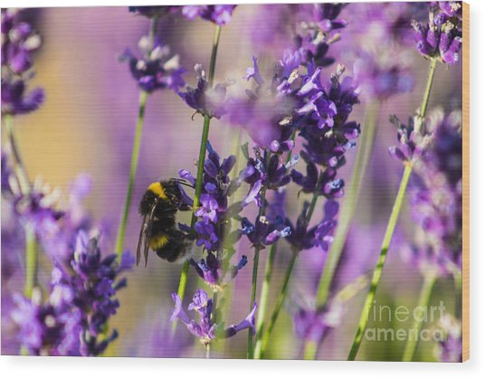Bee On Lavender Wood Print