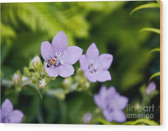 Bee On Lavender Flower Wood Print