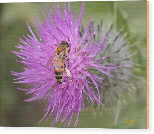 Bee On Purple Thistle Wood Print