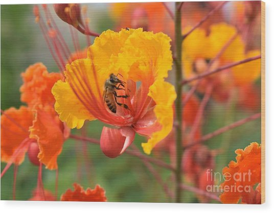 Bee Pollinating Bird Of Paradise Wood Print