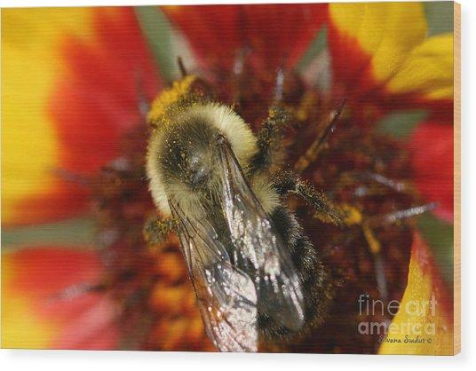 Bee Six - Wood Print by Silvana Siudut