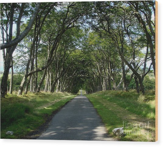 Beech Avenue Wood Print