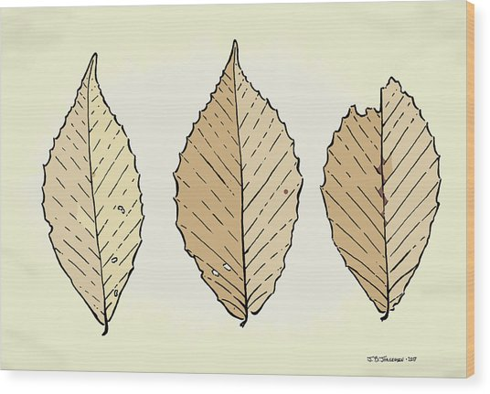 Beech Leaf Illustration Wood Print by Jamie Jorgensen