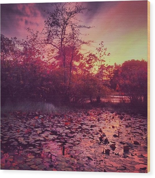 #beechforest #provincetown #sunset Wood Print by Ben Berry
