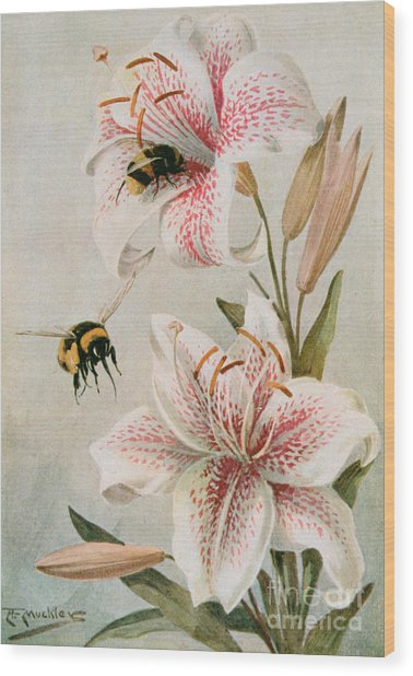 Bees And Lilies Wood Print