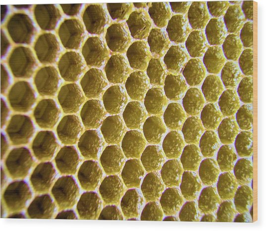 Bee's Home Wood Print
