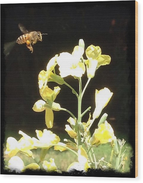 Bees Love Broccoli Wood Print