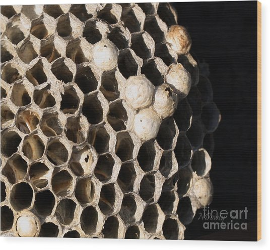 Bee's Nest Wood Print