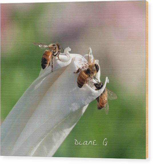 Bees On Angel Trumpet Wood Print
